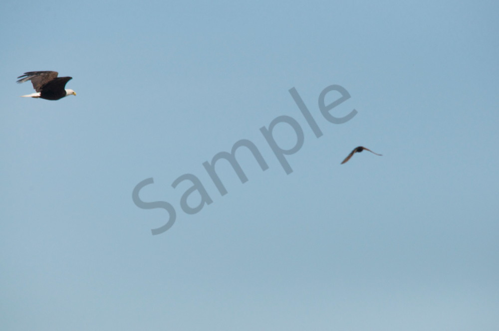 Two Eagles Soaring - Product #1259734 - MH Photography