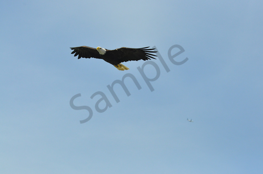 Beauty in Flight - Eagle Pictures - MH Photography