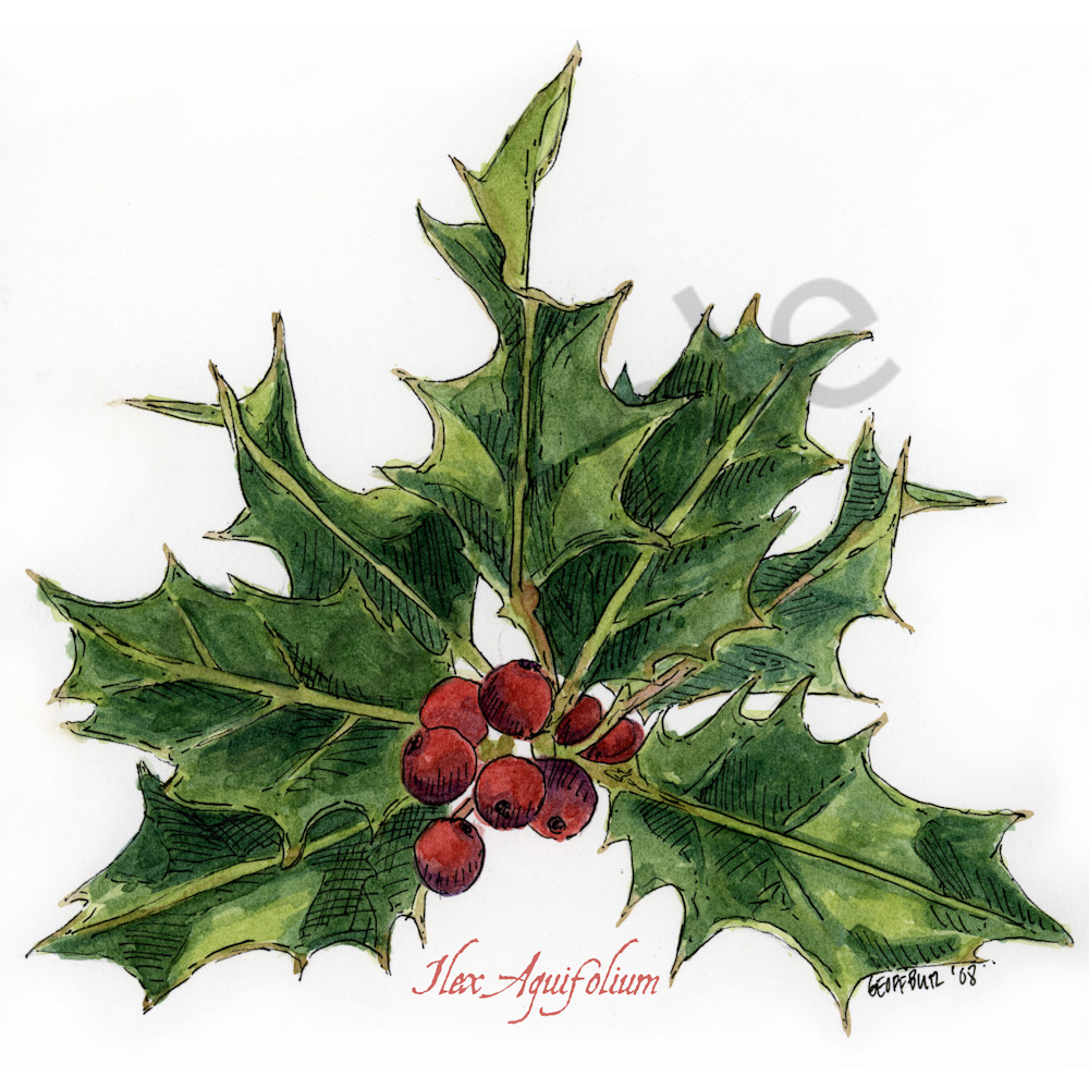 Dec-Holly