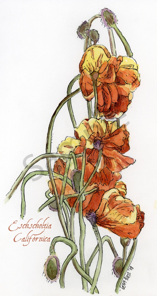 Aug Poppy Art | Geoffrey Butz Art & Design Inc