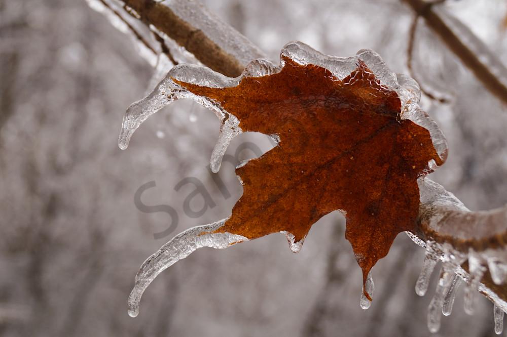 Frozen Photography Art | Sage & Balm Photography