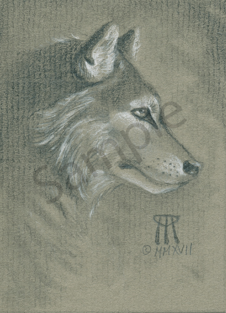 Small drawing by Melissa A Benson of a timber wolf in profile.