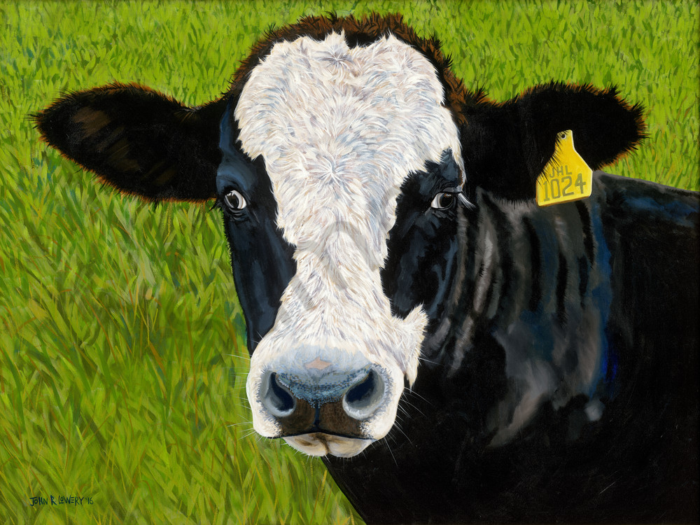 Black Baldy cow paintings by John R. Lowery, available as art prints