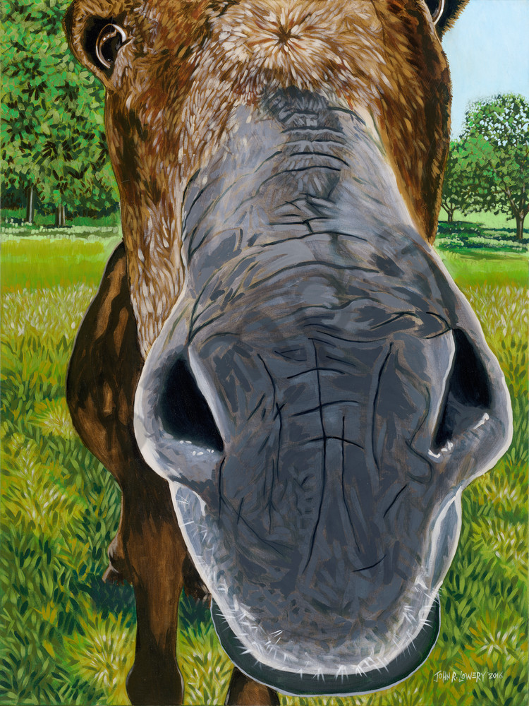 Close up donkey paintings by John R. Lowery for sale as art prints