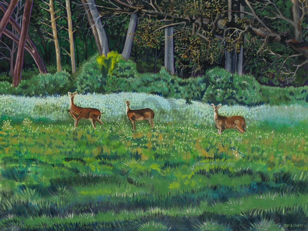Deer paintings by John R. Lowery available as art prints