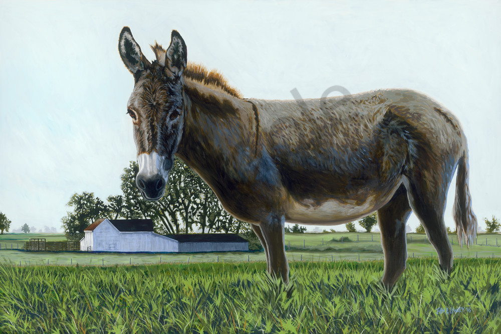 Donkey paintings by John R. Lowery,  for purchase as art prints.