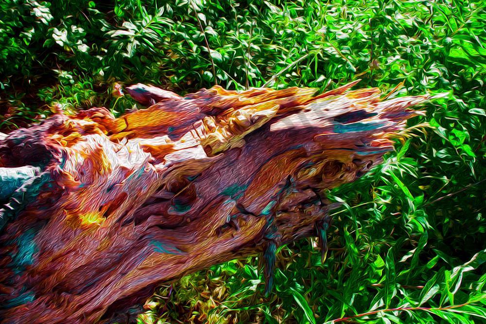 Lake Farmington Wood