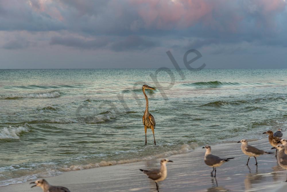 Waiting, a beautiful Florida beach photograph   Susan J Photography