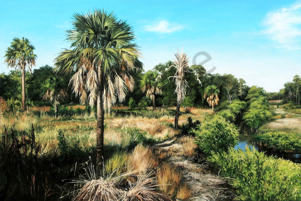 Lush mangrove Nature Trail print | Kevin Grass Fine Art