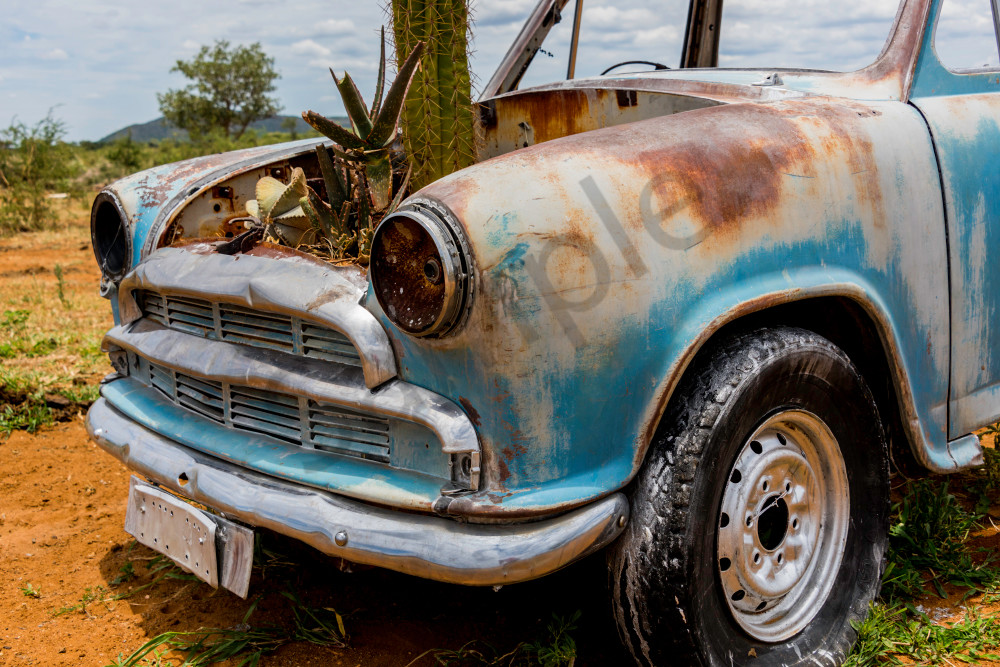 Abandoned rusting car with cactus growing in engine block