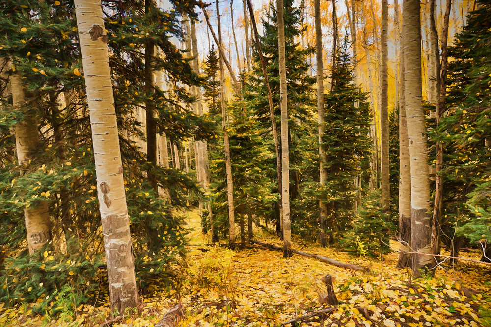 Lost in a Aspen Forest
