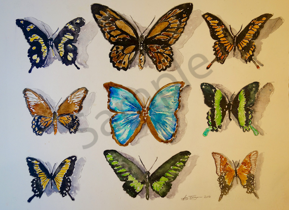 Harmless Butterfly Collection