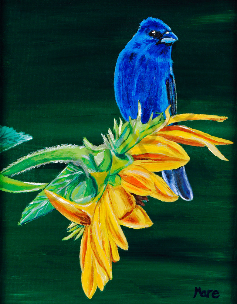 Original acrylic painting of Indigo Bunting and Sunflower by Mary Anne Hjelmfelt, print reproductions in many sizes and materials.