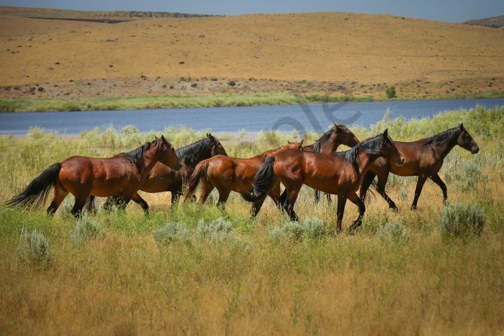 Wild Horses of Washoe Lake NV