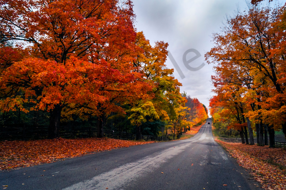 Country Road In Autumn Photography Art | Sage & Balm Photography