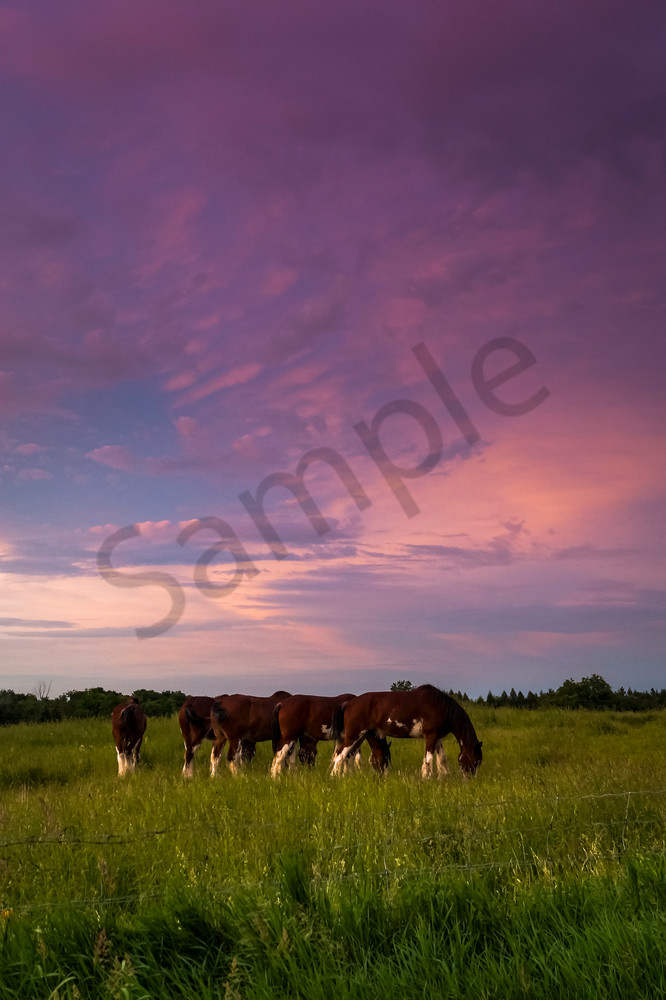 Grazing At Sunset Photography Art | Sage & Balm Photography