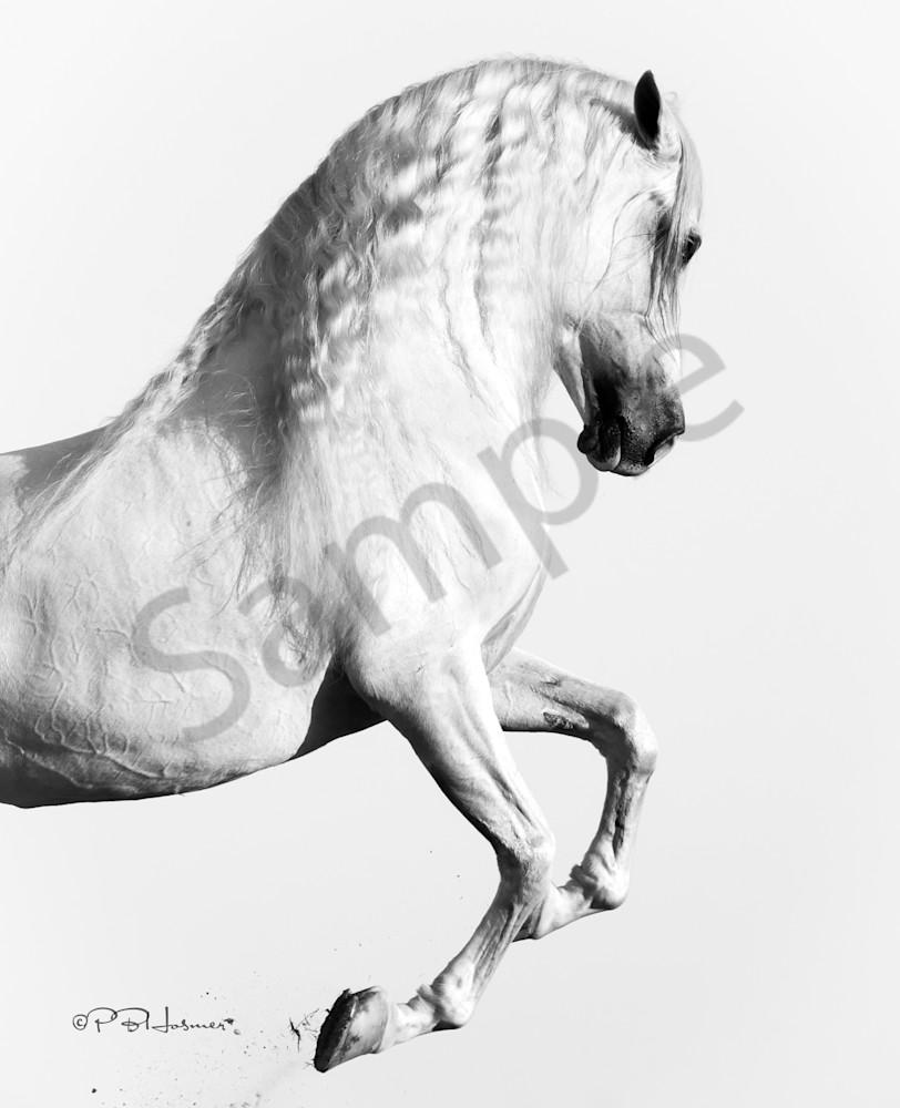 Elegant Equus Photography Art | HoofPrintsFineArt