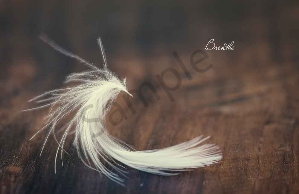 "Fine art photo of a white feather with ""breathe"" typography"