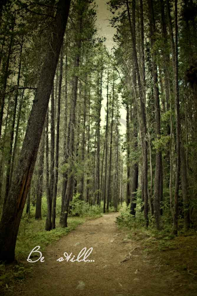 Fine art nature photograph of a narrow path in the woods.