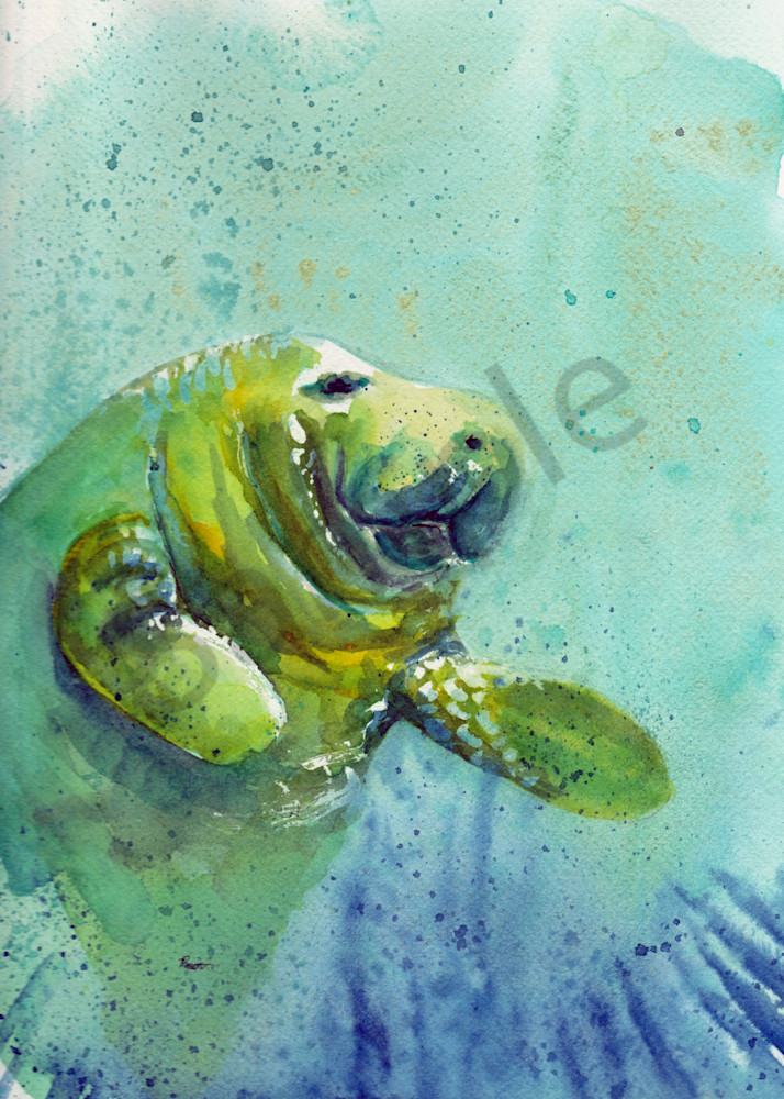 Manatee on the Left watercolor on boudreau-art.com