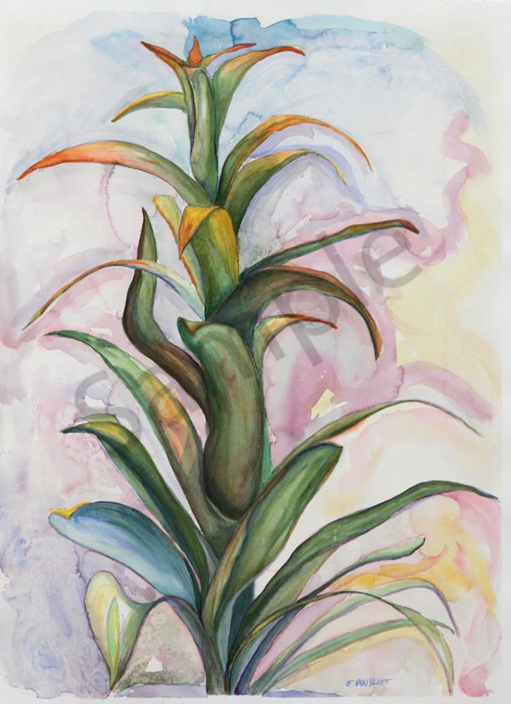 Watercolor bromeliad painting