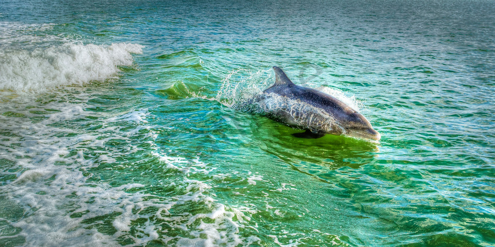 In The Wake Photography Art | John Martell Photography