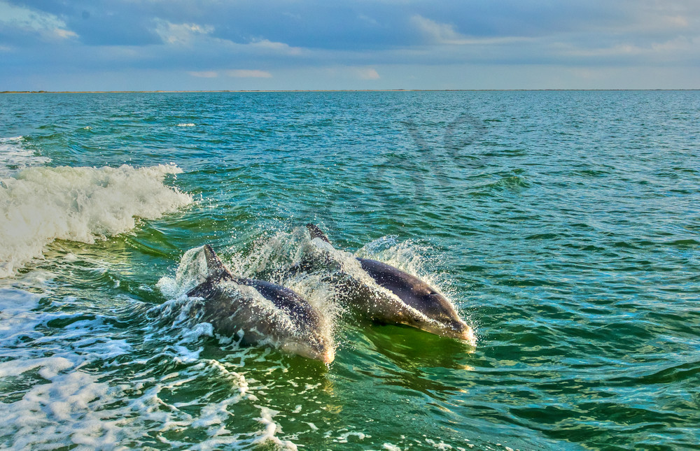 Dolphin Duo Photography Art | John Martell Photography
