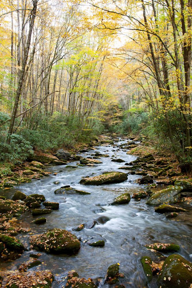 Fall Stream Art   Cunningham Gallery