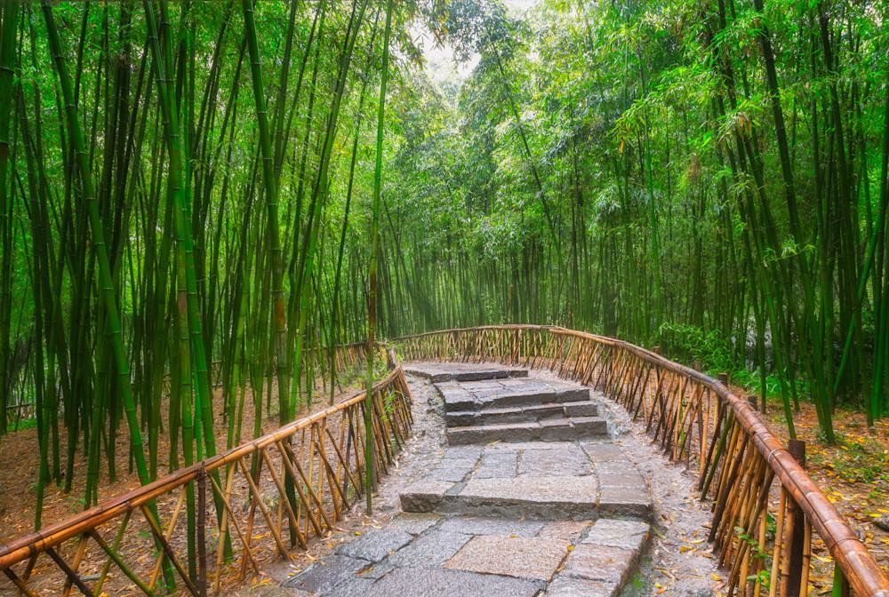 Bamboo Grove, Wuzhen, Zhejiang Province, China