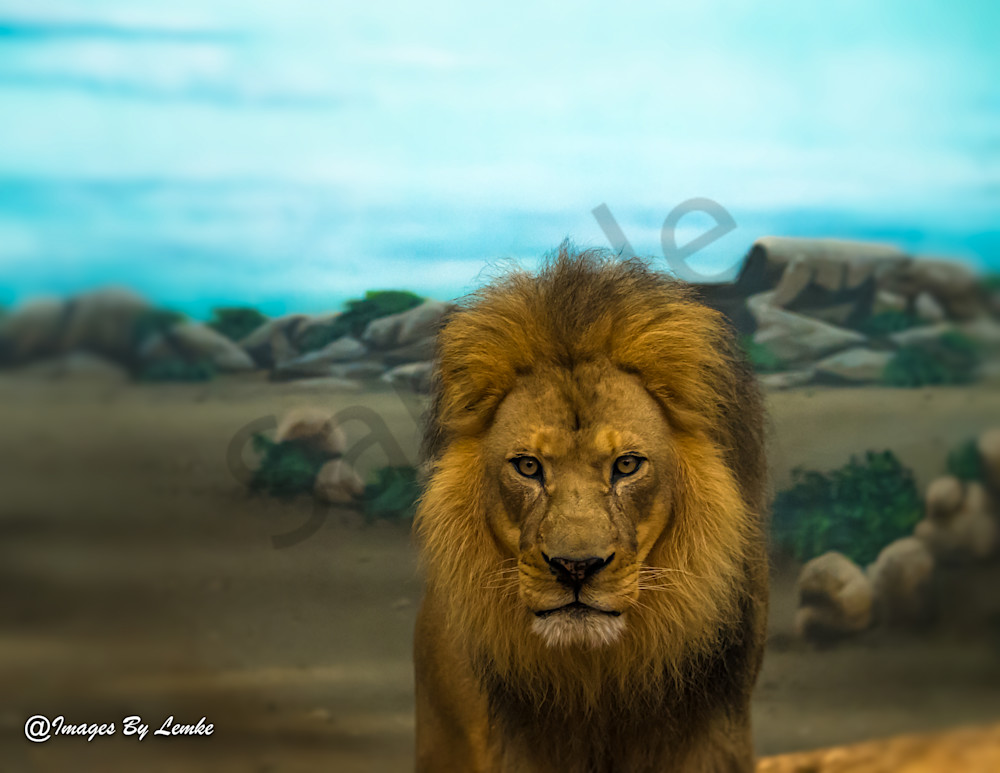 Lion on the African Plain