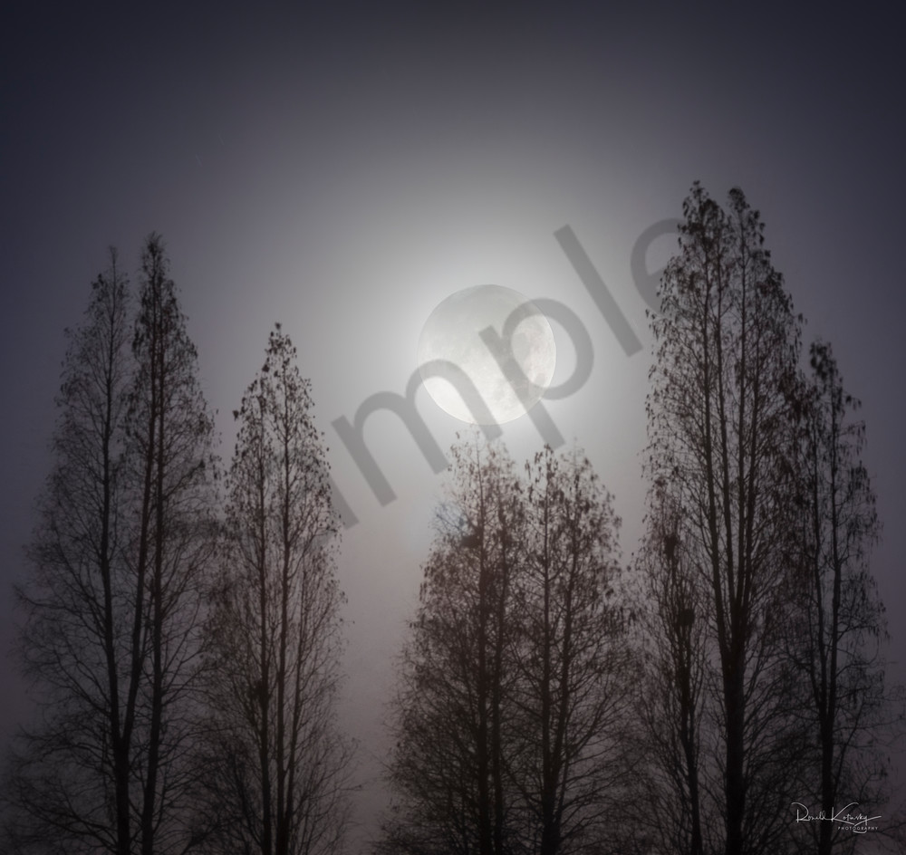 Cypress Super Moon Photographic Art