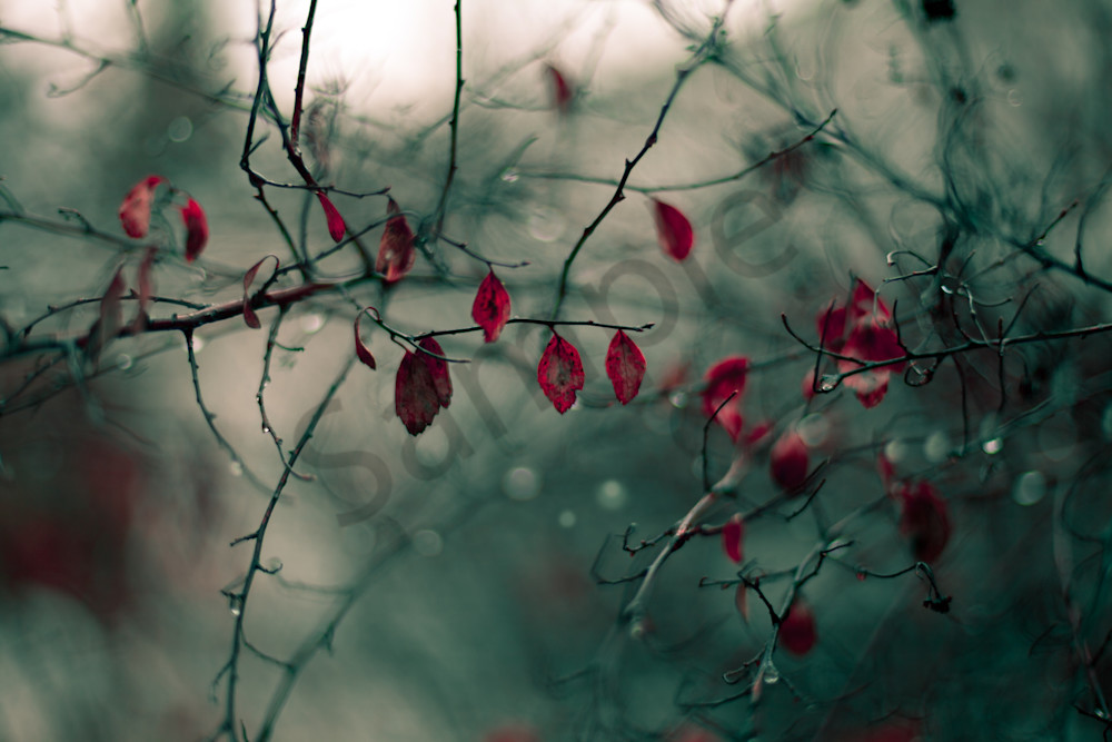 Red Leaves In The Rain Photography Art | Sage & Balm Photography