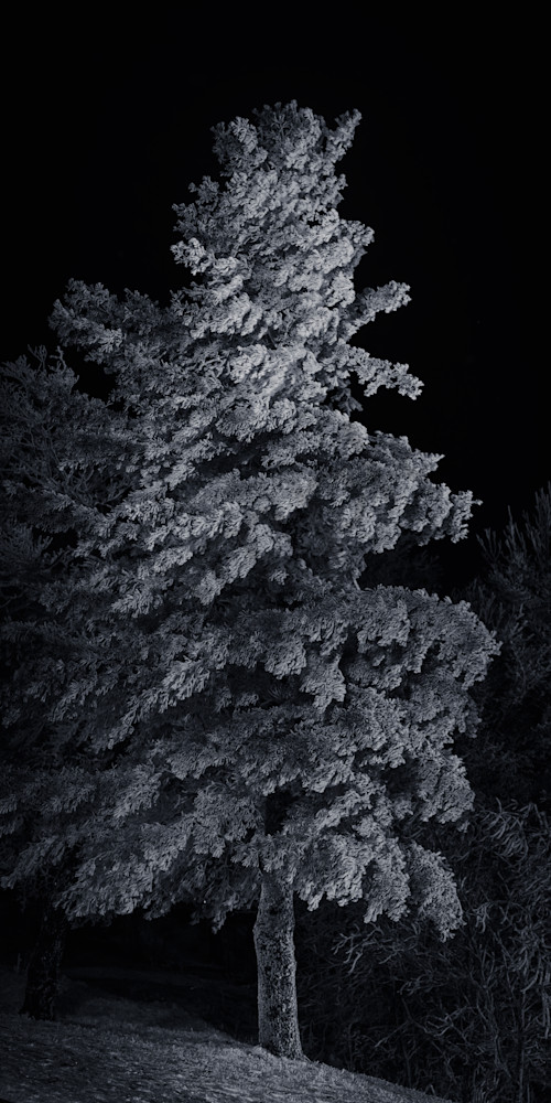 Winter  Tree Photograph for Sale as Fine Art