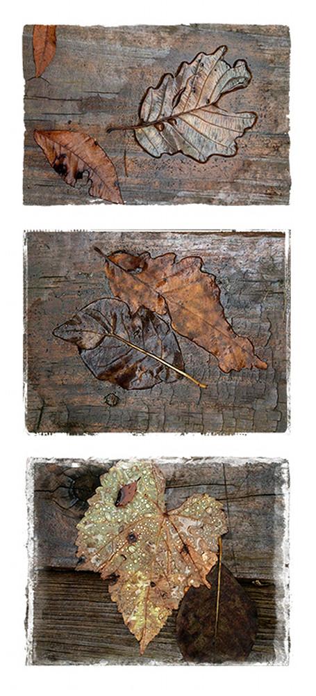 """Leaves Me Alone"" Art | Digital Arts Studio / Fine Art Marketplace"