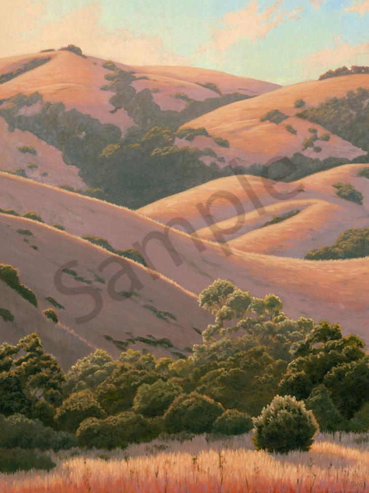 Summers Golden Hills Art   Terry Sauve Fine Art