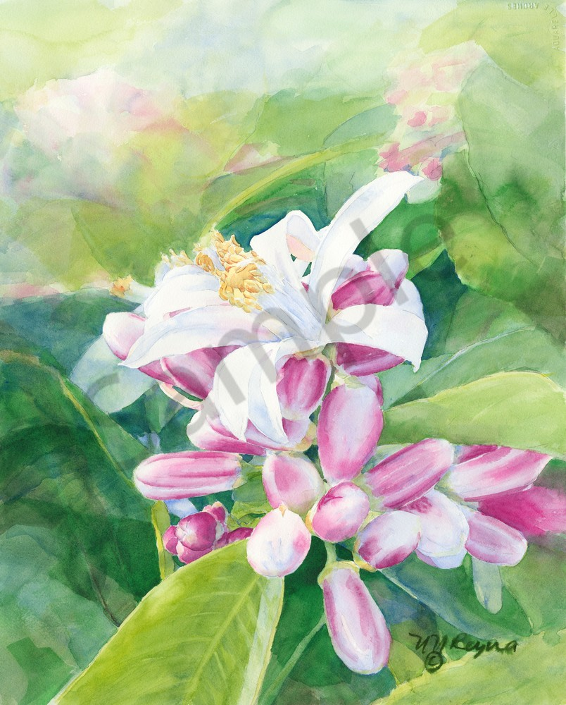Orange Blossom Art for Sale