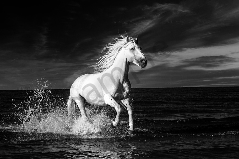 Infared Wild Horse In France 8242 Photography Art | Bridget Karam Photography