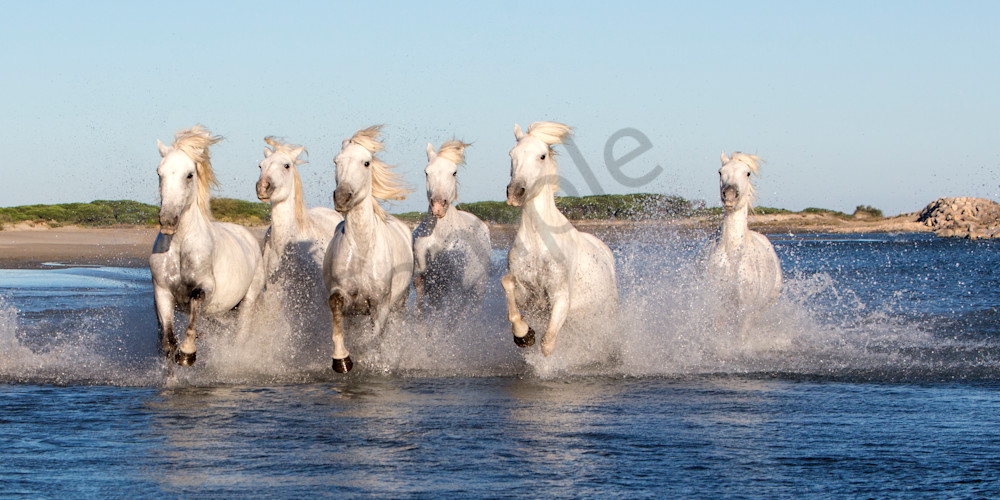 Francine's Horses 0173 Photography Art | Bridget Karam Photography