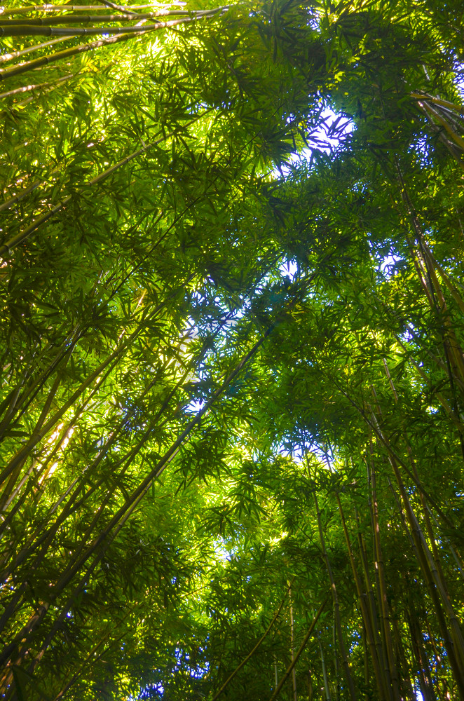 Bamboo 005