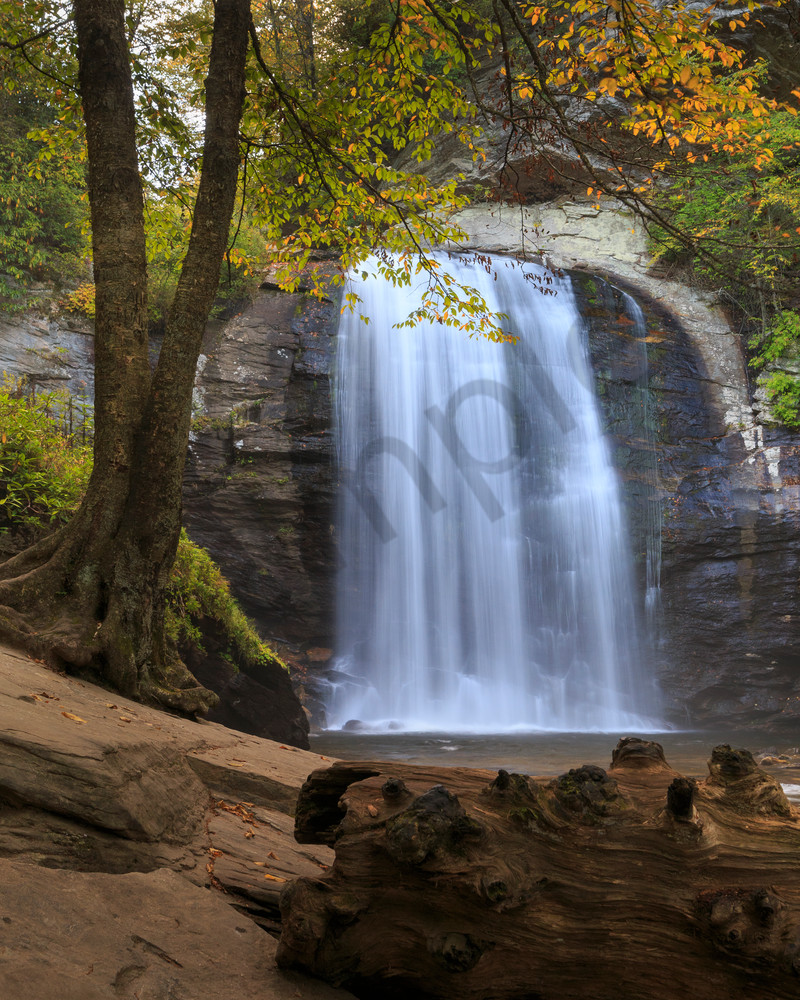 Waterfall Wall Art: Looking Glass Falls