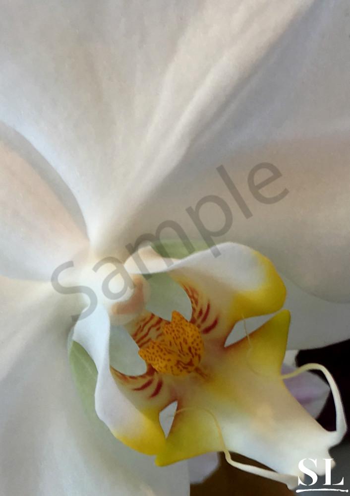 Simplicity Photography Art | slgparrish