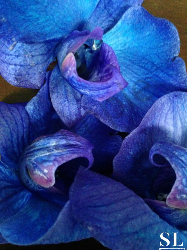 Blue Photography Art | slgparrish