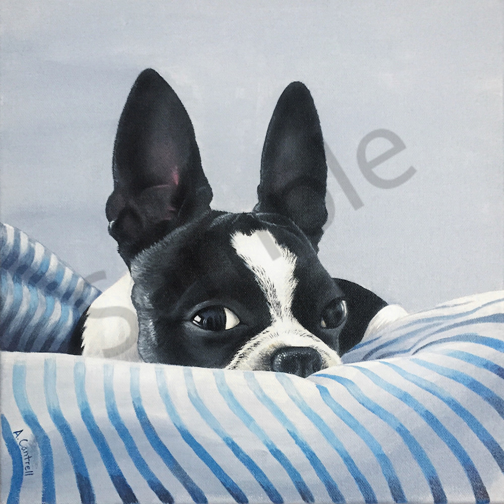 Boston Terrier portrait by Allison Cantrell titled Rustle of the Cheese Wrapper