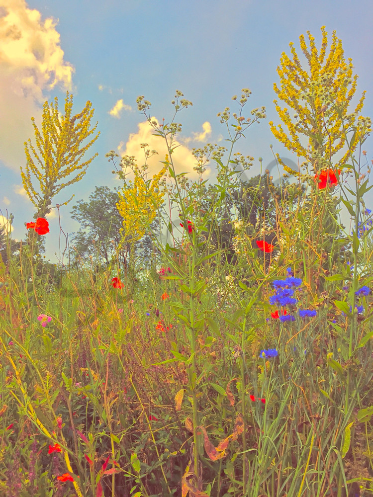 Summer Flowers and Clouds|Fine Art Photography by Todd Breitling|Flowers|Todd Breitling Art
