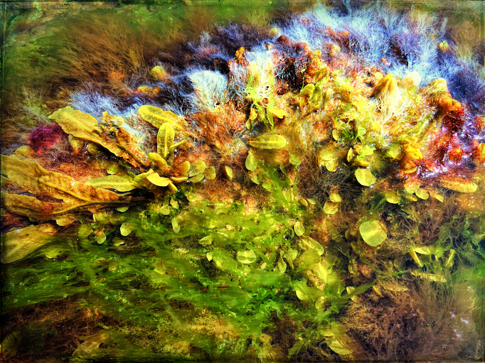 Seaweed Grunge|Fine Art Photography by Todd Breitling|On The Beach|Todd Breitling Art