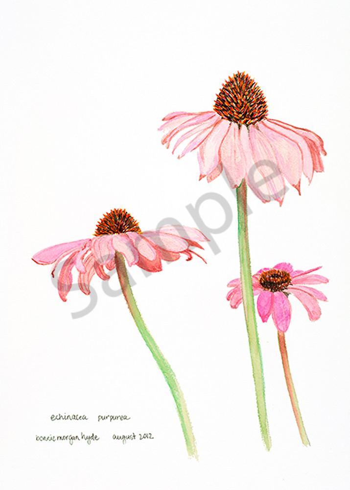 Echinacea Purpurea Art | Digital Arts Studio / Fine Art Marketplace