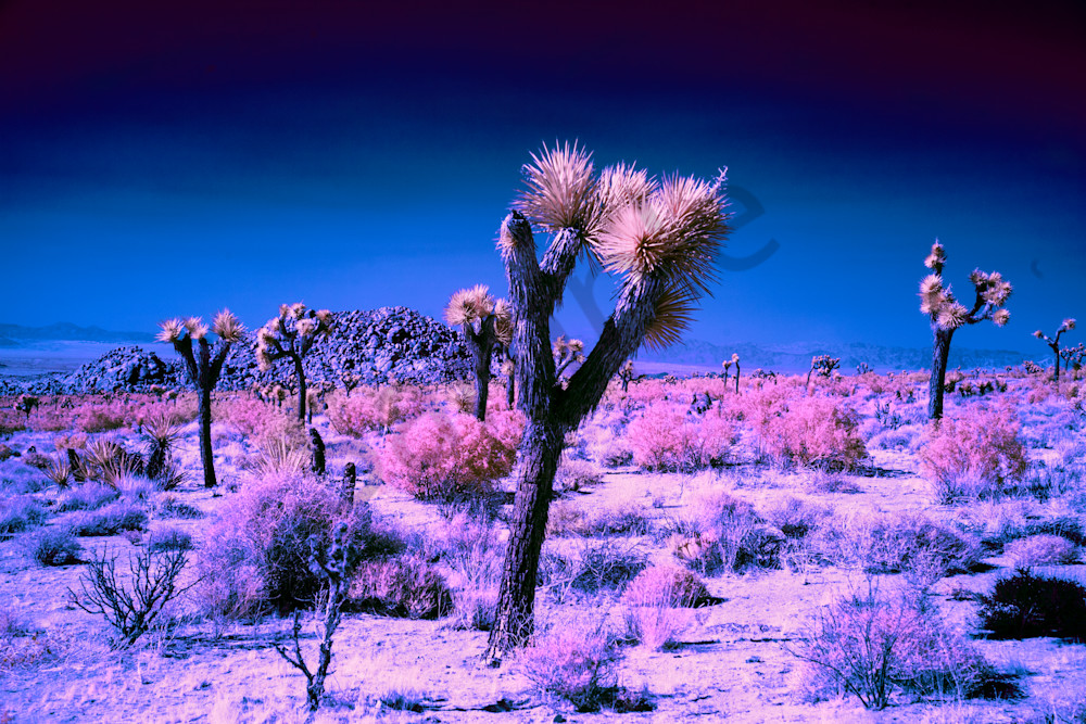 Infrared photography, art, in the desert