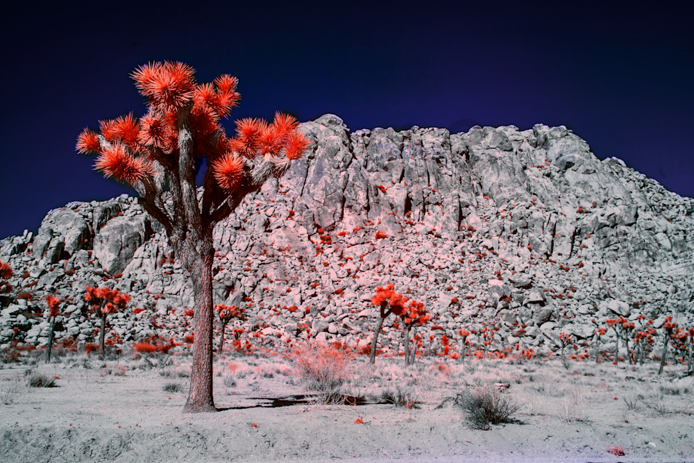 art, Infrared Photographs of Joshua Tree