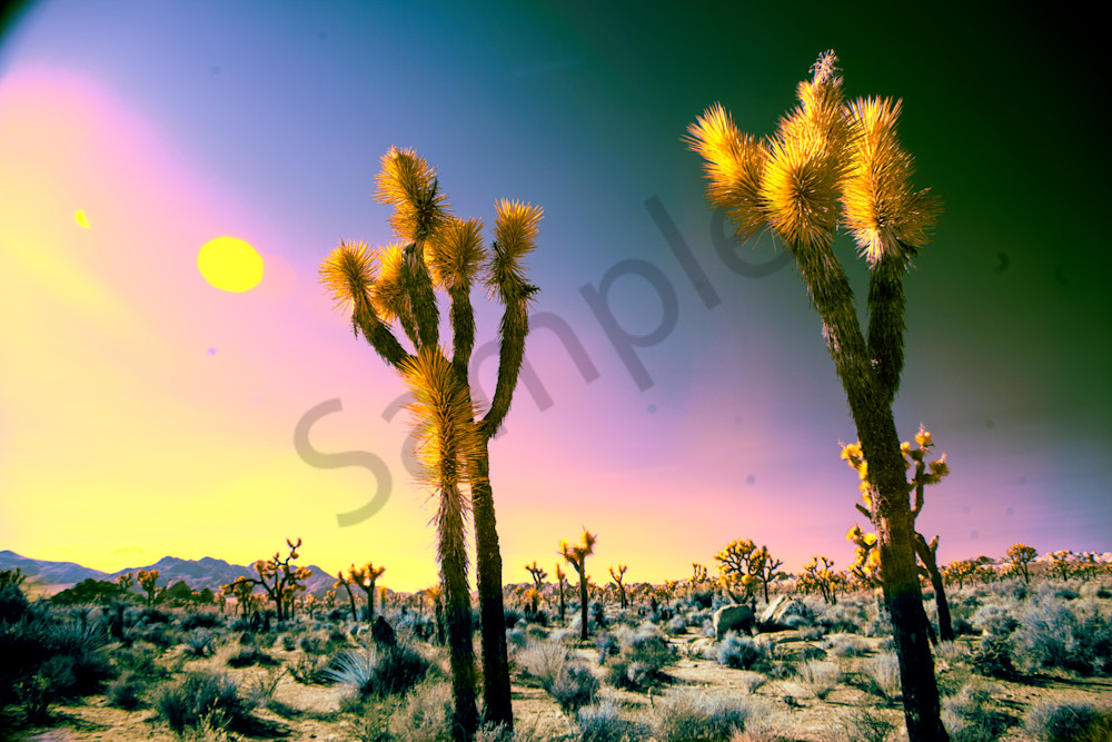 joshua Tree desert, art, photography