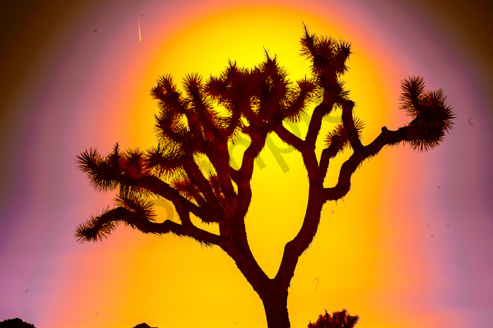 Close sillouette on joshua tree, art, photography